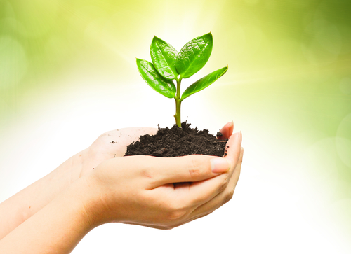 Cupped hands holding a pile of dirt with a small four-leafed seedling planted in it